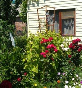 Сдаю летний домик для отдыхающих