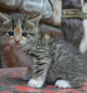 Супер шустрые и очень красивые котята