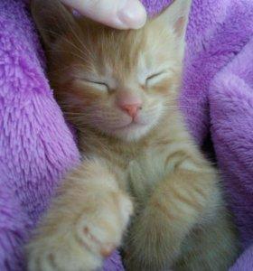 Отдам в добрые руки. Рыжий котенок.
