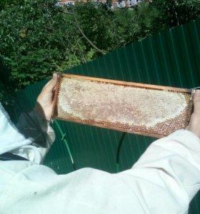 Мёд весенний