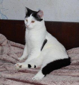 Кот в добрые руки, котик в дар Костик