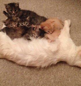 Отдадим милых котят в хорошие руки