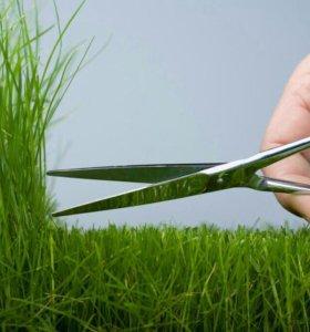 Трава, Покос,