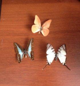 Бабочки для коллекции