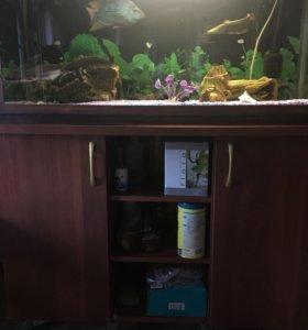Аквариум (150л)с рыбами равно аксессуарами