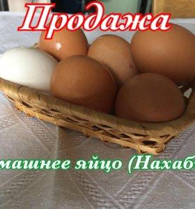 Яйцо (куриные, утиные, гусиные)