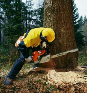 Валка и распиловка деревьев