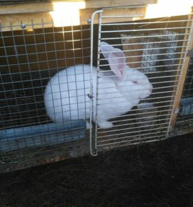 Кролики, мясо кролика