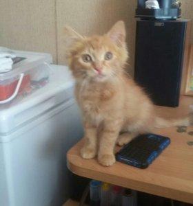 Кошечка 3 месяца в добрые руки