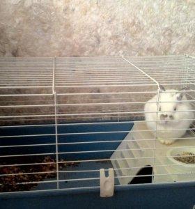 Кролик домашний с большой клеткой