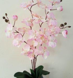 Авторская цветочная композиция Орхидеи