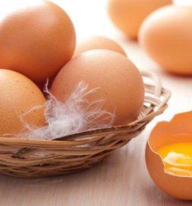 Домашние яйца от благородных кур
