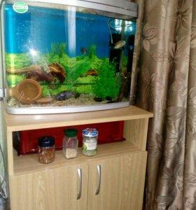 Тумба под аквариум, телевизор