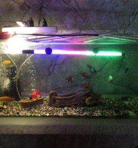Продам два аквариума с рыбками и оборудованием!