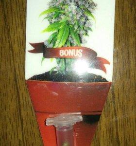 Семена марихуанны для попугаев
