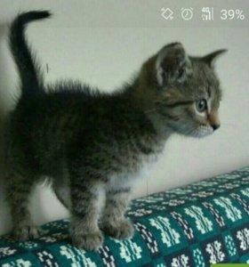 Кошечка мышеловка