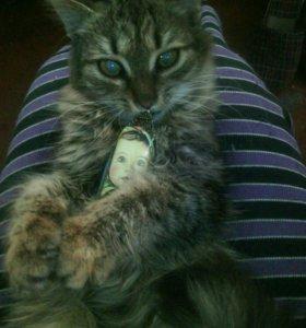 Стерилизованая кошка