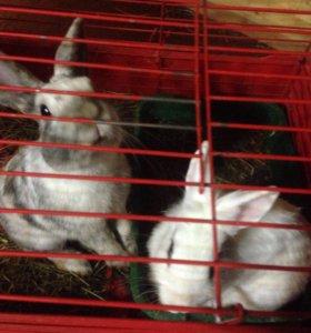 Кролики (мальчик и девочка), поилка, миска, клетка