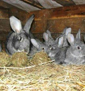 Кролики любого возраста