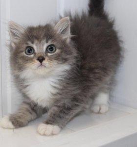 Котенок в добрые руки, котик в дар Фаня