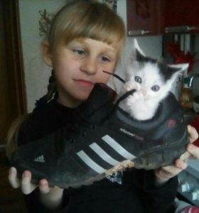 Котята мальчишки)))