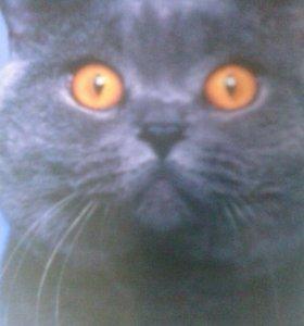 Стрижка кота за 30 минут