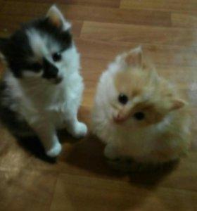 """Отдам рыжего котенка по кличке """"персик""""."""