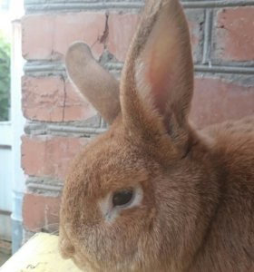 """Кролик """"Коля"""""""
