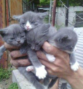 Милые месячные котята! Даром!)