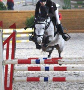 Пони-клуб в Люберцах