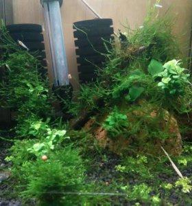 Гуппи,креветки,раки,растения