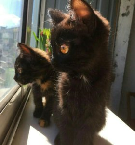 Красивые котятки ждут маму