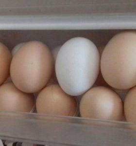 Яйцо домашнее куриное