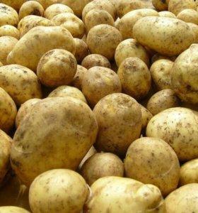 Картофель на еду
