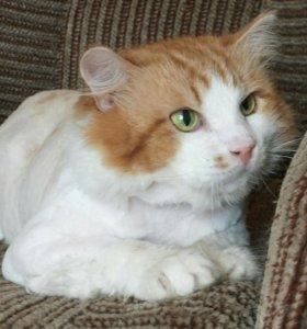 Шикарный котик 7 лет в семью или нужна передержка