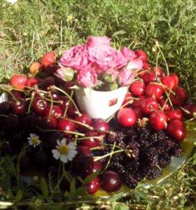 Вишня,черешня с сада!