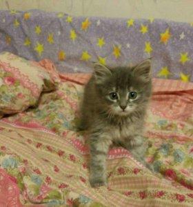 Котёнок. 1,5 месяца
