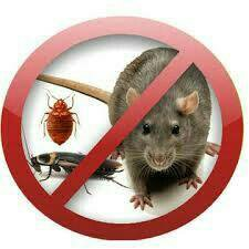 Травим тараканов, клопов, крыс, мышей.