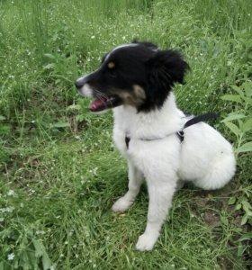 Тесси щенок метис