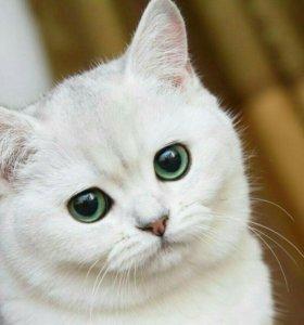 Декоративные котята различной порода.Доставка.