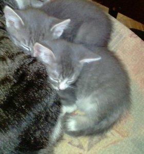 Милые ласковые кошечки