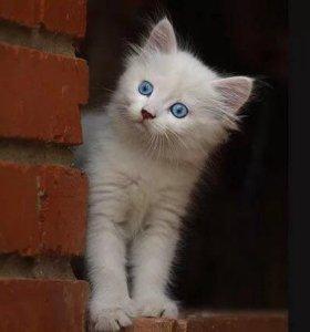 Котёнок, бесплатно