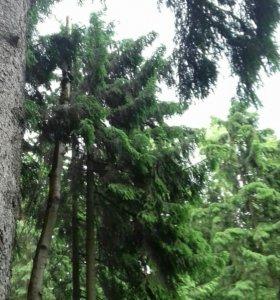 Спилим деревьев с любой сложности