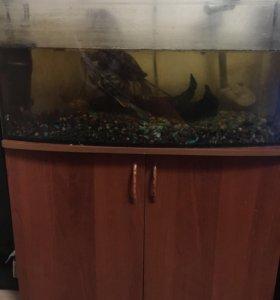Аквариум с фильтром, черепах,тумбу