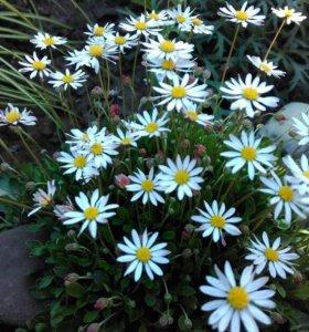 Растения для вас