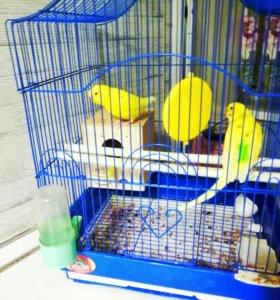 Два жёлтых, весёлых попугая ;-)