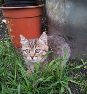 Кошечка 2месяца.