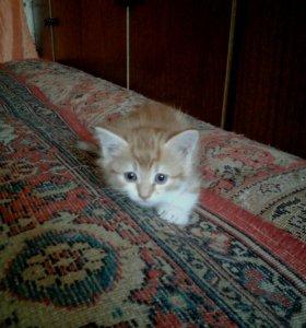 Отдам котенка в добрые руки!)