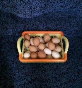 Продаю домашние яйца