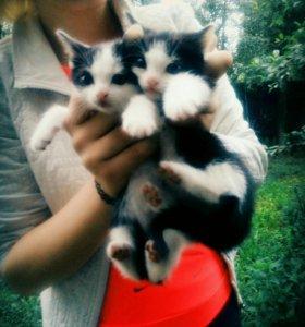 Котята ( 2 мальчика)